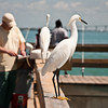 on the fishing pier at Lighthouse Beach, Sanibel Island