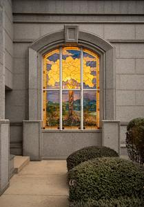 San Antonio Tree of Life-5626
