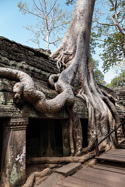 2019, Cambodia, Angkor Park, Ta Prohm Temple