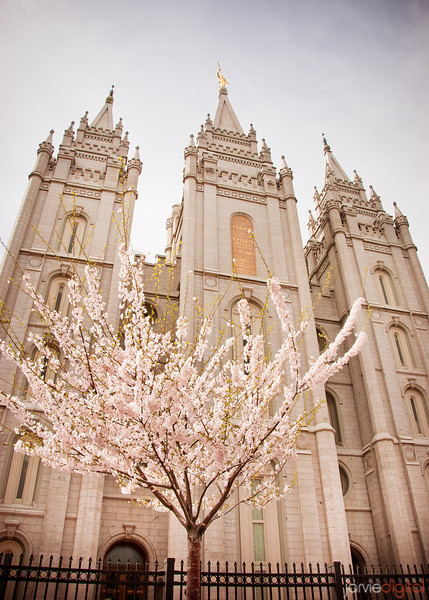 Salt Lake LDS Temple Cloudy spring day with flowering tree