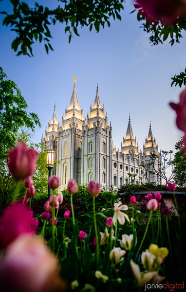 Salt Lake temple in the springtime with the tulips