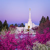 Denver Temple - Colorful morning