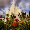Brigham City Roses