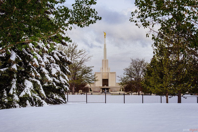 Denver Temple Through Trees