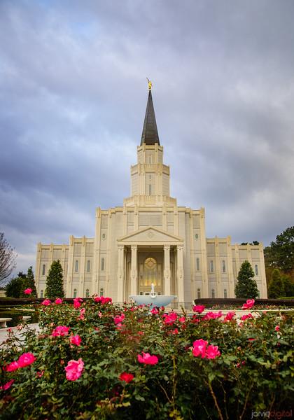 Houston Temple - Roses