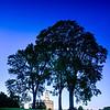 Nauvoo Temple Trees