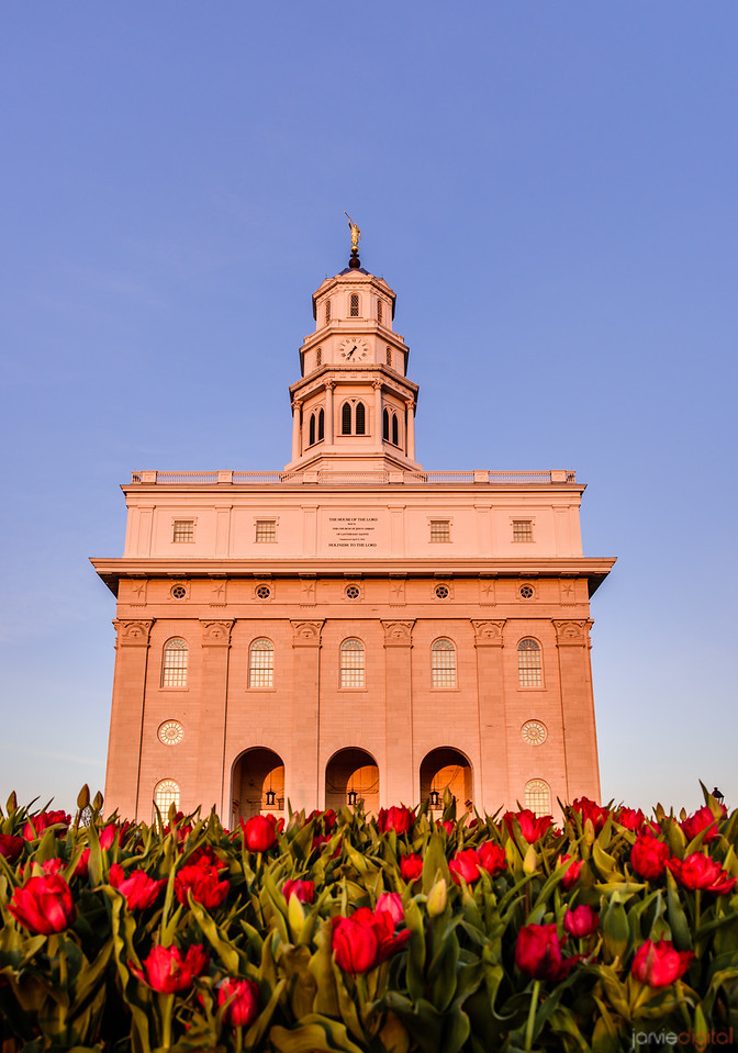 Nauvoo Temple - Roses
