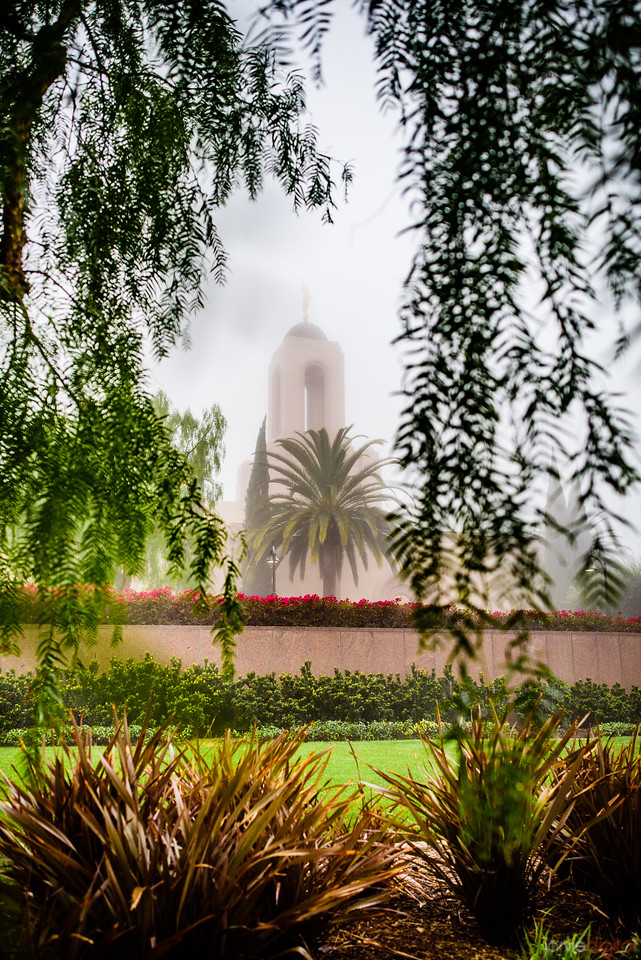 Newport Beach Temple - Through the Trees