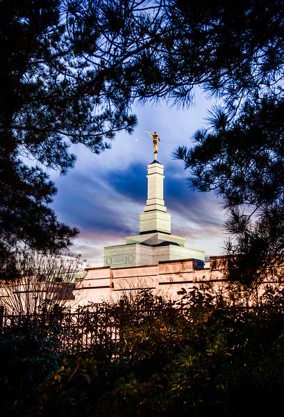North Carolina Temple - Tree Vertical
