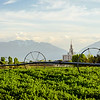 Panorama of Payson temple and the Sprinklers