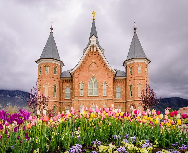 Provo City Center Temple - Springtime Tulips