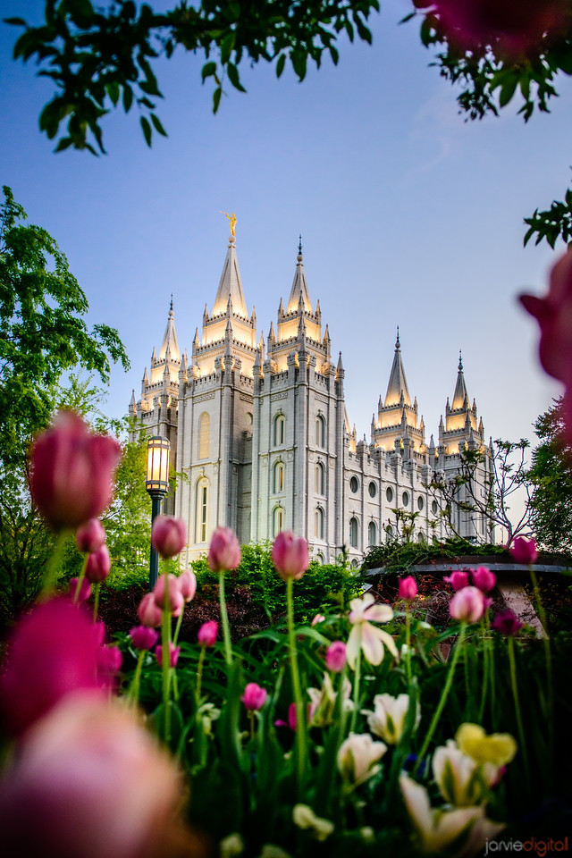 Salt Lake Temple with Tulips