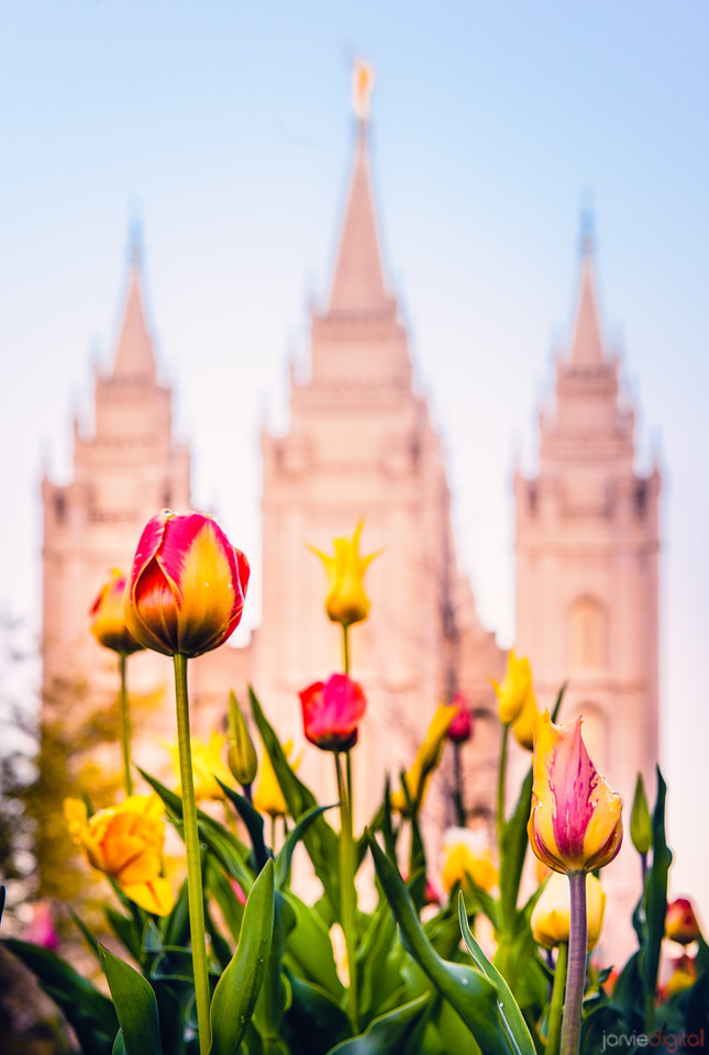 Salt Lake Temple - Tulips and the temple