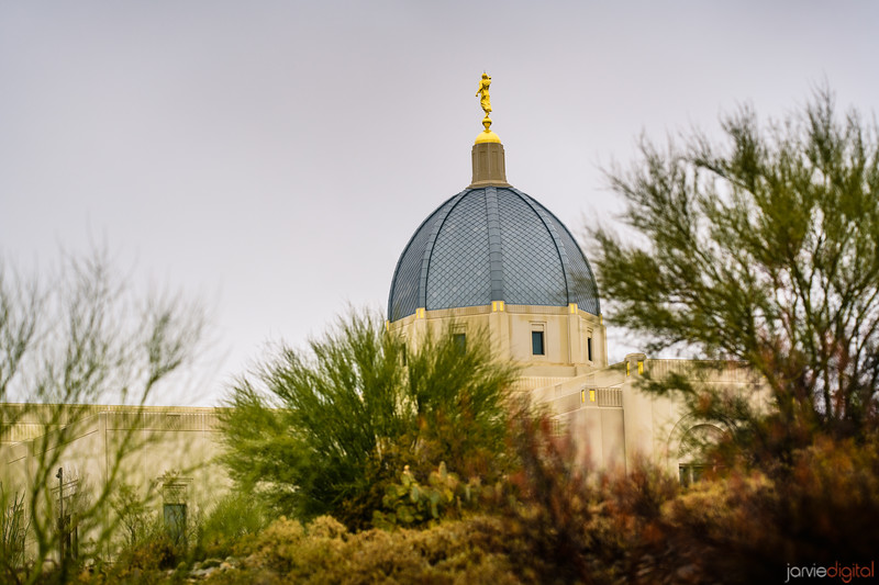 Tucson LDS Temple - desert plants