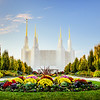 Washington DC Temple with Flowers