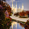 DC Temple Morning Reflection