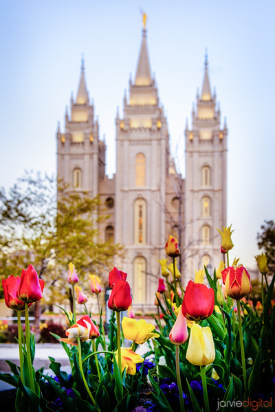 SLC Temple Lulips