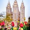 SLC Temple Lulips