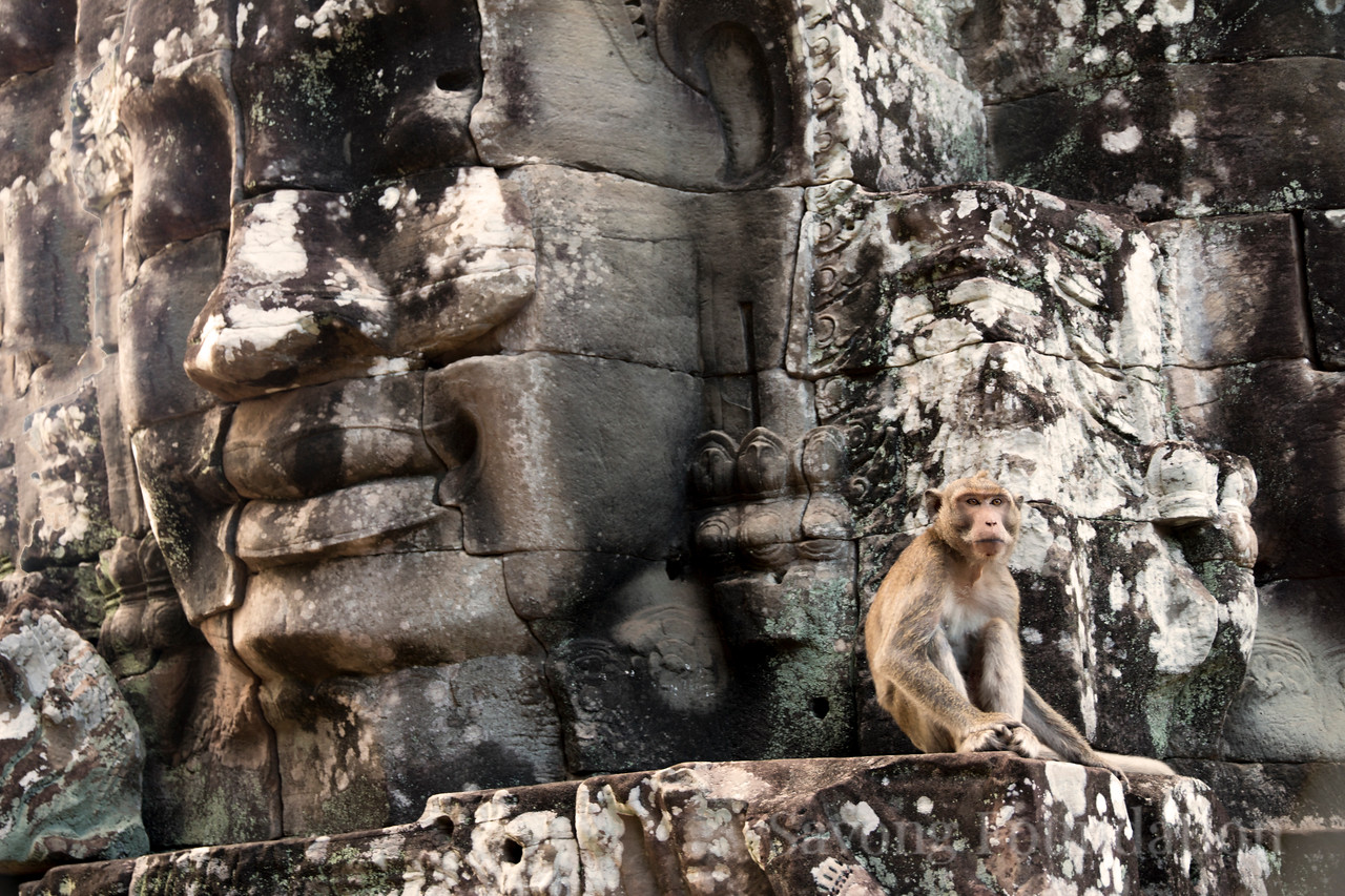 Mokey at the Bayon