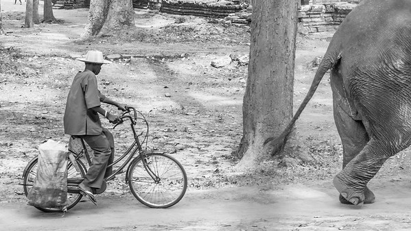 Bicycle and Elephant, Cambodia