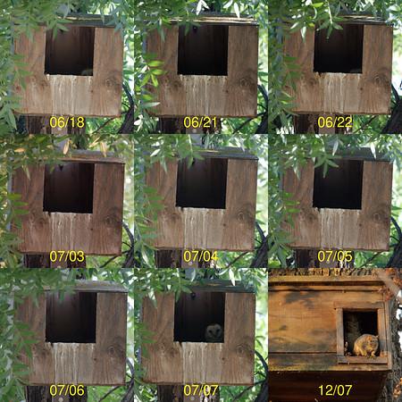Owl Boxes