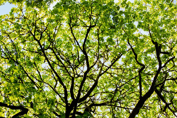 Green Skys at Day