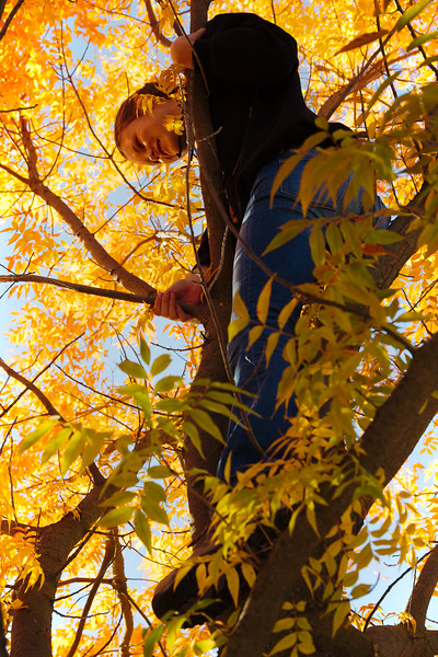 Fall Don't Fall