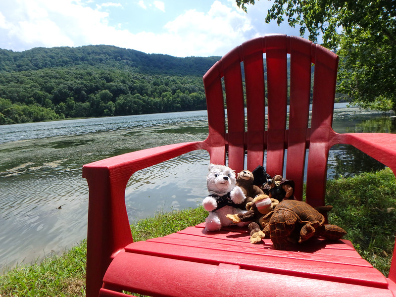 The mascots enjoy our riverside view.