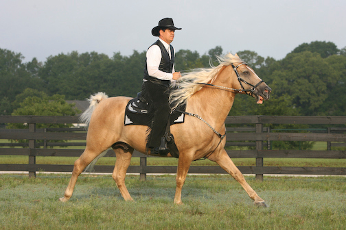 Ivory Pal Under Saddle Part II