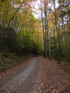 I love those old forest service roads they remind me of home.