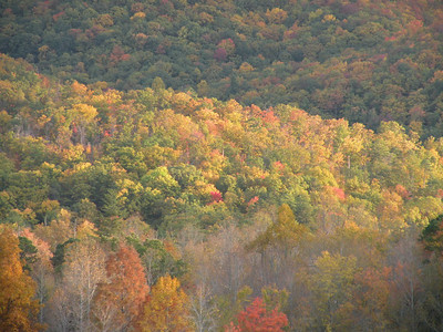 Lots of good color up in the mountains