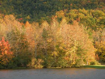 Trees on the opposite shore