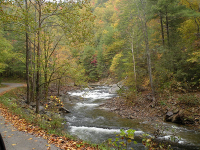 Citico Creek from FR 35
