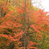 Fiery tree at the bridge for Bald River Falls
