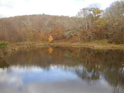 Spring fed pond at Whigg Meadow