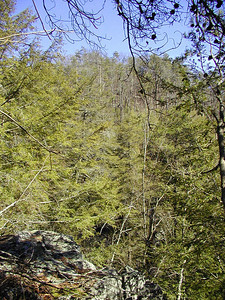 Edge of the bluff on the way to Bullett Creek Falls Slopes of Starr Mtn.  Cherokee National Forest, TN