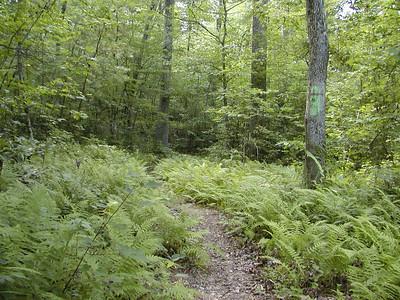 Bullett Creek Trail thru a fern glade