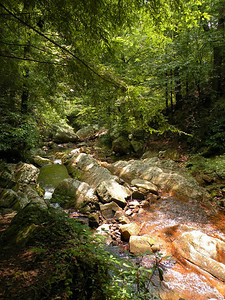 One of the fords of the stream at Gee Creek. It is Summer in this photo and this is easy in Summer. During Winter or Spring it is far harder.  Gee Creek Wilderness Slopes of Starr Mtn.  Cherokee National Forest, TN