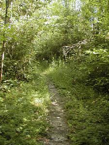 Bullett Creek Trail in August