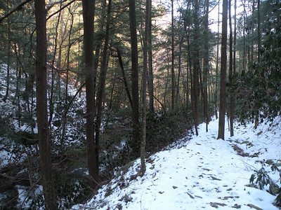 Favorite spot in the forest along Scenic Spur Trail