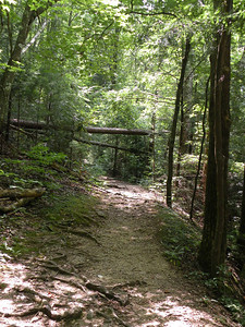 A straighter, easier section of trail that is a relief from the rocks!