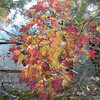Colorful leaves along the shores of Chilhowee Lake's far shore