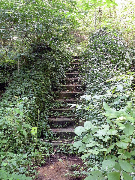 Ivy covered steps leading up to the old patio.. very magical looking. This hike has been filled with contradictions.