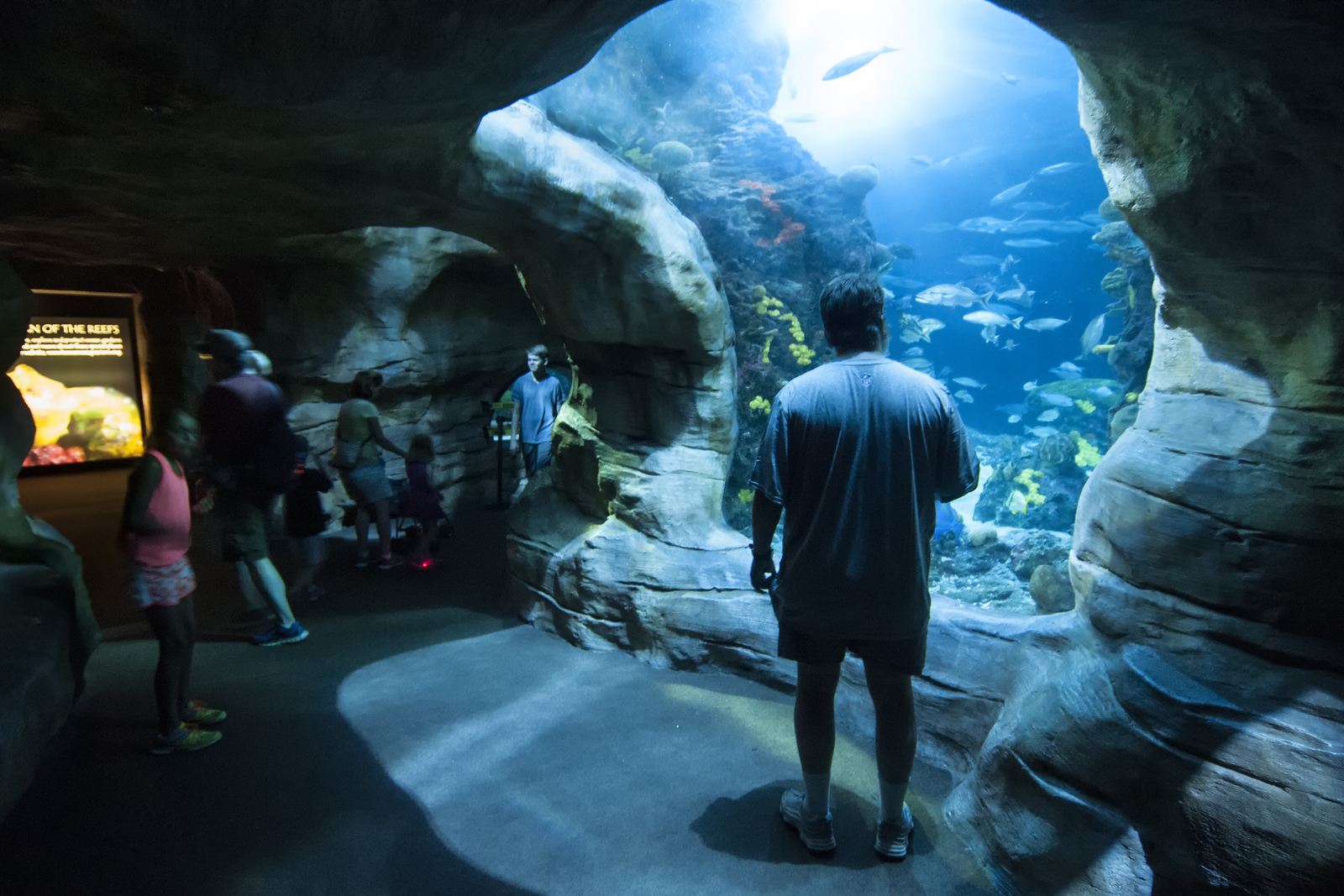 People move through tunnels beneath the fish tank inside the Ocean Journey building at the Tennessee Aquarium in Chattanooga, TN on Friday, July 17, 2015. Copyright 2015 Jason Barnette Photos of the Tennessee Aquarium are available for licensing for editorial use in newspapers and magazines, however these photos are not available for print sales.