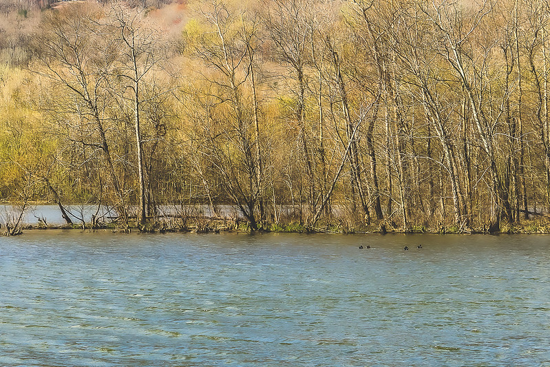Cove Lake State Park in Caryville Tennessee