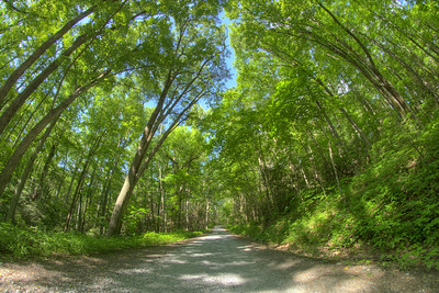 The view of the dirt and gravel Unaka Mountain Road in Erwin, TN on Saturday, June 13, 2015. Copyright 2015 Jason Barnette