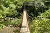 The long swinging bridge leading to trails above Cane Creek Cascades at Fall Creek Falls State Park in Spencer, TN on Thursday, July 16, 2015. Copyright 2015 Jason Barnette