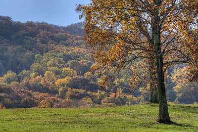 Vibrant fall colors in Johnson City, TN on Friday, November 1, 2013. Copyright 2013 Jason Barnette