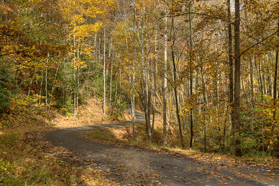 Fallen leaves and vibrant fall colors at Buffalo Mountain Park in Johnson City, TN on Friday, November 1, 2013. Copyright 2013 Jason Barnette