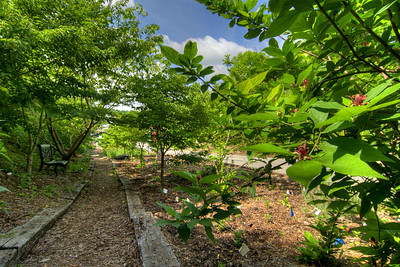 A path leads visitors through a small wooded area at the outdoor Ardinna Woods Arboretum in Jonesborough, TN on Friday, June 6, 2014. Copyright 2014 Jason Barnette